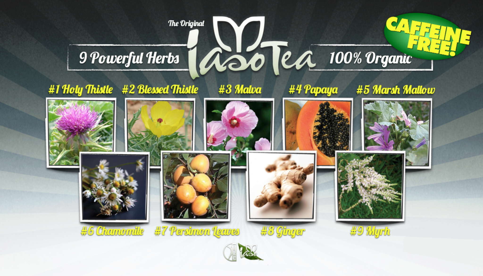 Herbs contained in Iaso Tea